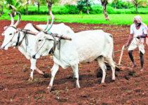 डॉ. बाबासाहेब आंबेडकर कृषि स्वावलंबन योजना 2021: रजिस्ट्रेशन व लाभार्थी लिस्ट